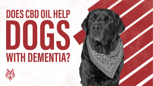 CBD oil and dementia for dogs